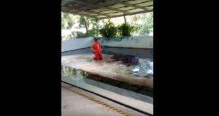 Κροκόδειλος άρπαξε στα σαγόνια του το κεφάλι φύλακα | ΒΙΝΤΕΟ