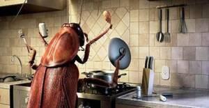 Αυτή τη μυρωδιά δεν την αντέχουν με τίποτα τα μυρμήγκια και οι κατσαρίδες!