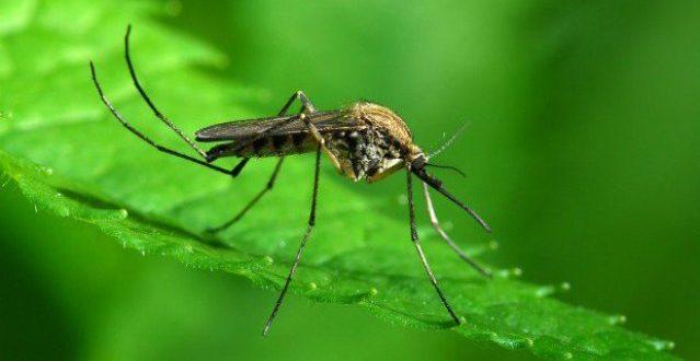 Κουνούπια τέλος! Φυσικοί τρόποι για να τα διώξετε μια και καλή