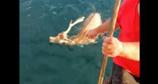 Πήγε για ψάρεμα και «ψάρεψε»... ελάφι