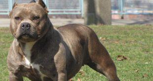 ΤΡΟΜΟΣ στο Φλαμούλι από επιθέσεις σκύλου!!!