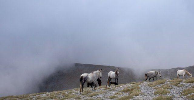 Τα πανέμορφα άγρια άλογα του Ολύμπου