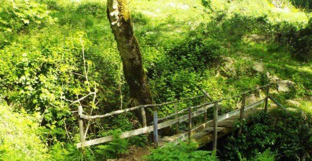 Τετράμετρος καλικάντζαρος στο δάσος του Γοργογυρίου στα Τρίκαλα!!! | ΦΩΤΟ