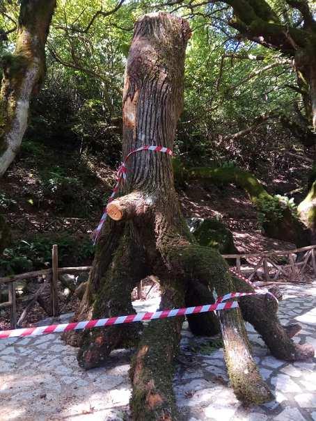 Τετράμετρος καλικάντζαρος στο δάσος του Γοργογυρίου στα Τρίκαλα!!!