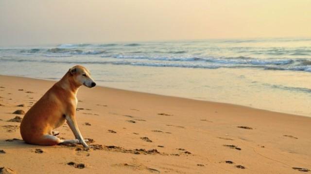 Τι ισχύει για τα σκυλιά στις παραλίες
