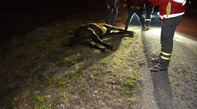 Λεωφορείο συγκρούστηκε με άλογο σε βραδινό δρομολόγιο στη Λάρισα