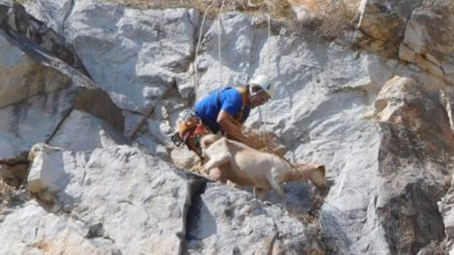 Επιχείρηση διάσωσης ζώων από απόκρημνη χαράδρα