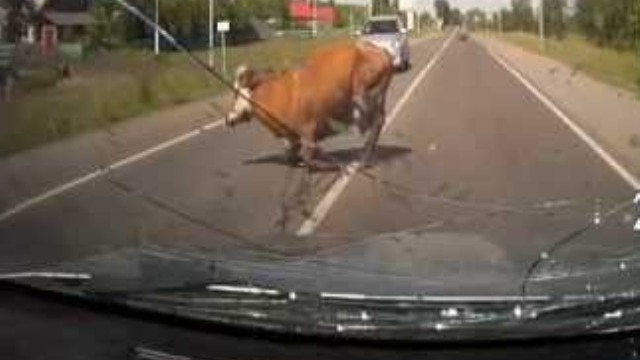 Photo of Αυτοκίνητο συγκρούστηκε με… αγελάδα στο Μουργκάνι Καλαμπάκας!