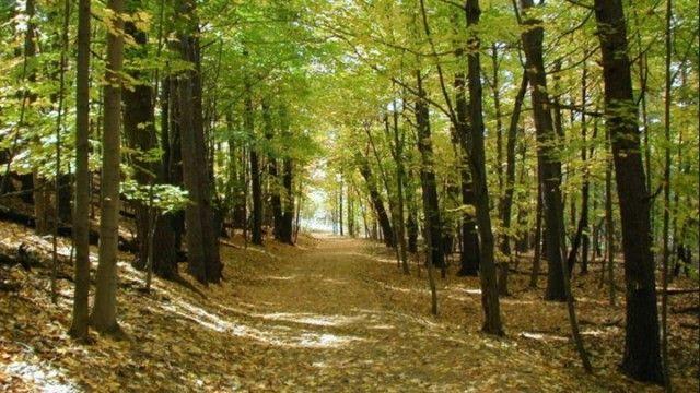 Tο νέο πρόγραμμα για την αντιπυρική προστασία των δασών