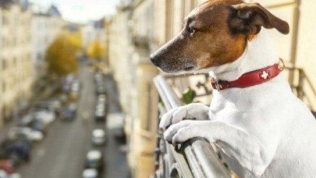 Τι προβλέπει το νέο ν/σ για σκύλους και γάτες στις πολυκατοικίες