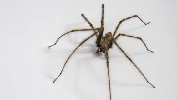 Πώς να κρατήσετε τις αράχνες μακριά από το σπίτι σας