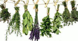 Επιστημονικό σεμινάριο για τα φαρμακευτικά φυτά στα Τρίκαλα | Αιτήσεις έως 23-11-18