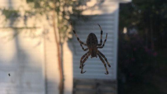 Δύο τρόποι για να μην πιάνει σύντομα το σπίτι σας αράχνες