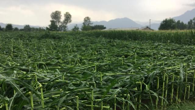 Καταστροφικό μπουρίνι με ισχυρή χαλαζόπτωση στα Τρίκαλα