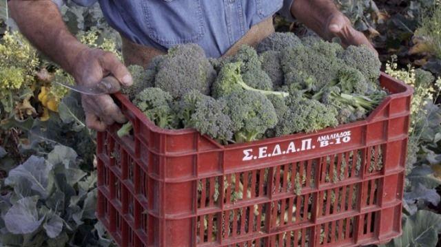 Τα λάχανα και τα μπρόκολα μειώνουν τον κίνδυνο για καρκίνο