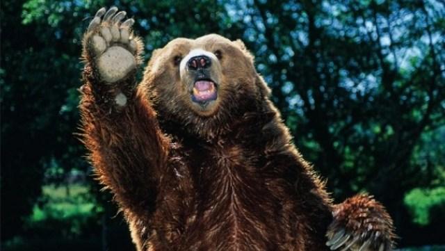 Γυναίκα βοσκός ήρθε πρόσωπο με πρόσωπο με αρκούδα στα Τρίκαλα
