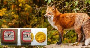 Νέες ρίψεις εμβολίων κατά της λύσσας στα Τρίκαλα – Οι περιοχές κάλυψης
