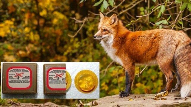 Νέες ρίψεις εμβολίων κατά της λύσσας στα Τρίκαλα
