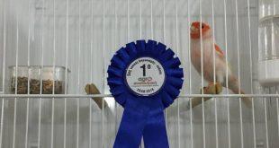 Αυλαία για την 5η έκθεση-διαγωνισμό καναρινιών και αγριοπουλιών!