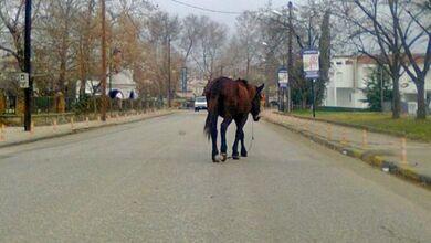 Άλογο περιφέρεται στην οδό Πύλης