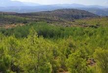 Δασικοί χάρτες: Νέες προθεσμίες και σε Τρίκαλα