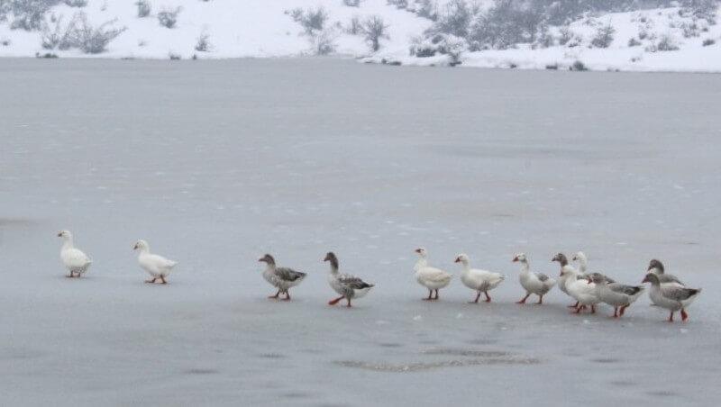 Μοναδικό τοπίο στην παγωμένη λίμνη του Αγίου Βησσαρίωνα στην Πύλη