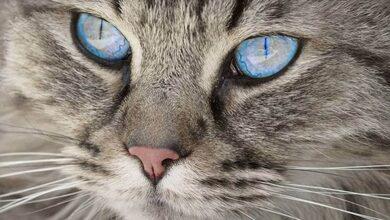 Έπεσε ξύλο για τα μάτια μιας... γάτας!!!