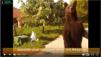 Δίμετρη αρκούδα έκανε βόλτες μέσα σε χωριό της Φλώρινας