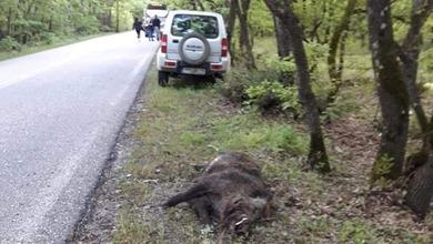 Photo of Τροχαίο ατύχημα Τρικαλινού με… αγριογούρουνο!