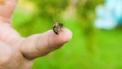 Τσίμπημα από μέλισσα ή σφήκα