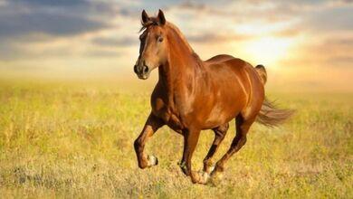 Κρούσμα του ιού του Δυτικού Νείλου σε άλογο
