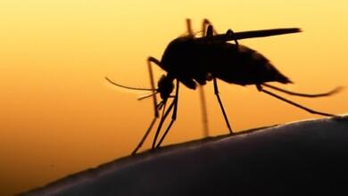 Κρούσμα ιού του Δυτικού Νείλου παρουσιάστηκε στα Τρίκαλα