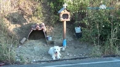 Σκύλος ζει δίπλα στο εικόνισμα του νεκρού αφεντικού του