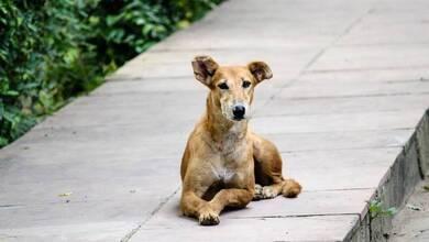Επίθεση αδέσποτου σκύλου σε παρέα νεαρών κοριτσιών στα Τρίκαλα