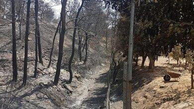 Αυτό είναι το δέντρο που δεν καίγεται με τίποτα!!!