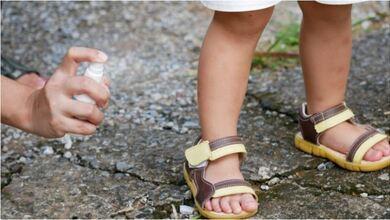 Κουνούπια Culex: Αυτά ευθύνονται για τον ιό του Δυτικού Νείλου
