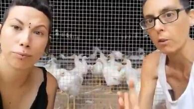 Επιδρομή σε κοτέτσι επειδή οι κόκορες... βιάζουν τις κότες!!!