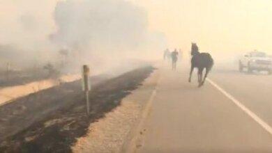 Photo of Άλογο μπαίνει στις φλόγες για να σώσει την οικογένειά του