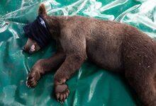 Photo of Καρέ καρέ ο απεγκλωβισμός μικρής αρκούδας στον Κορυδαλλό Καλαμπάκας | ΒΙΝΤΕΟ