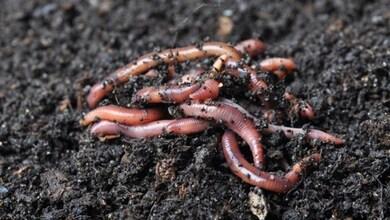 Photo of Εμφάνιση σκουληκιών σε περιοχές των Τρικάλων