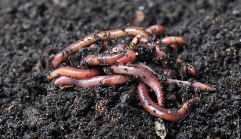 Εμφάνιση σκουληκιών σε περιοχές των Τρικάλων