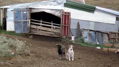 Photo of Ζωοκλέφτες «σήκωσαν» ένα μαντρί πρόβατα στην Λάρισα