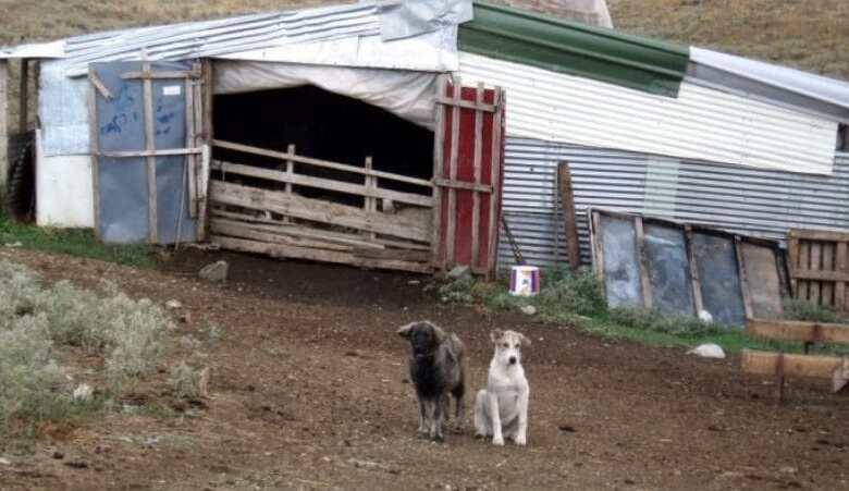 Ζωοκλέφτες «σήκωσαν» ένα μαντρί πρόβατα στην Λάρισα