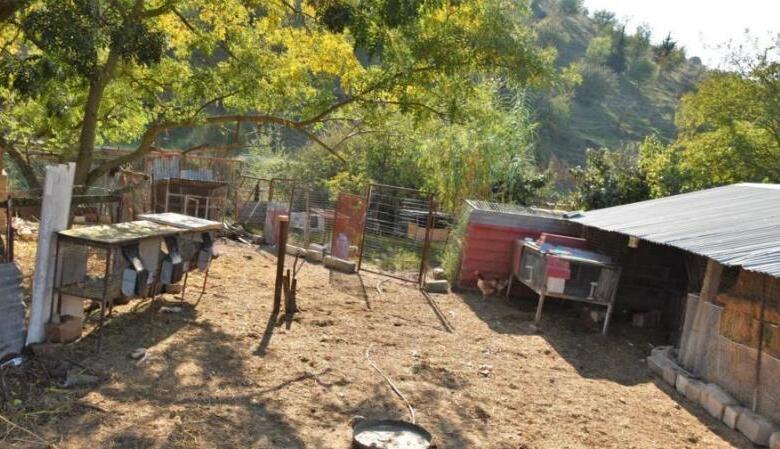 Λύκοι κατασπάραξαν αιγοπρόβατα στη Κρήνη Τρικάλων