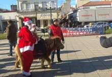 "Photo of Άλογα του ""Βουκεφάλα"" στην Κεντρική Πλατεία Τρικάλων | ΒΙΝΤΕΟ"