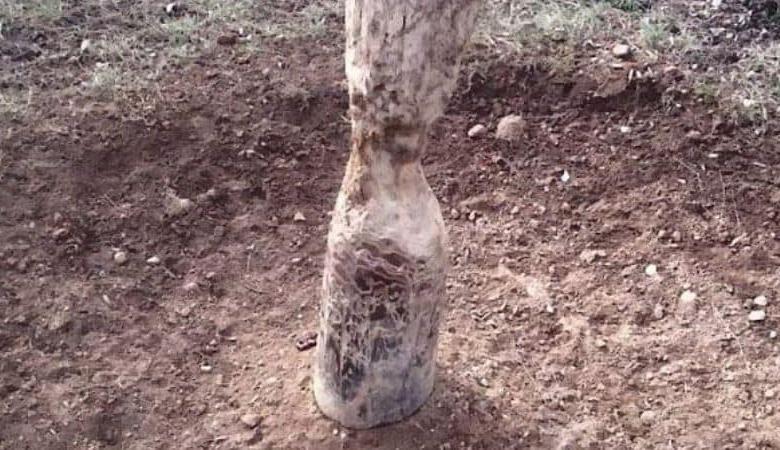 Αγριογούρουνα έφαγαν τις κολώνες της ΔΕΗ σε χωριό των Τρικάλων