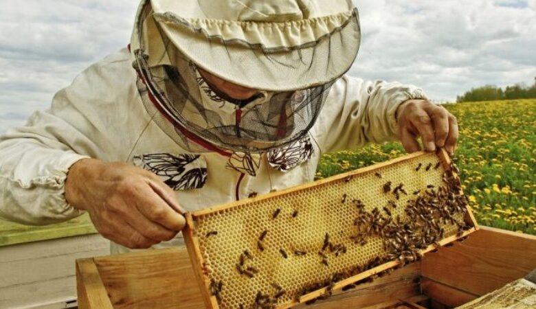 Εκπαίδευση μελισσοκόμων στα Τρίκαλα από το Γεωπονικό Πανεπιστήμιο