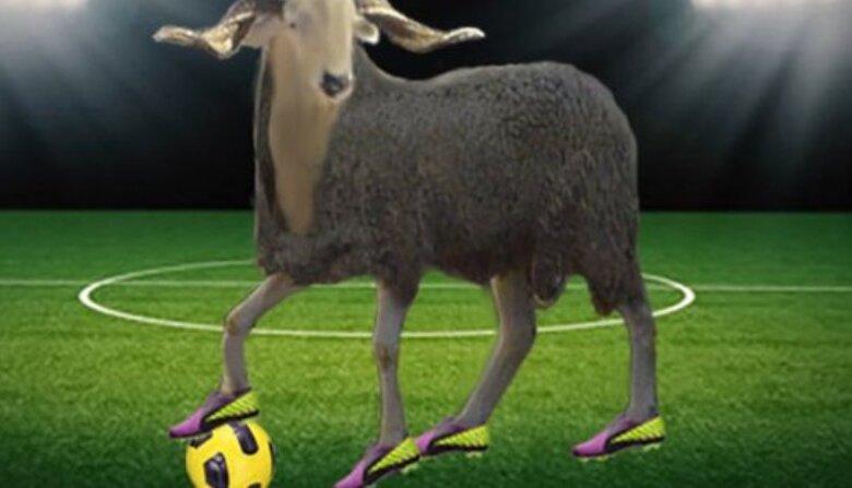 Photo of Θυσίασαν πρόβατα στο γήπεδο για να «ξορκίσουν» ατυχίες και τραυματισμούς!