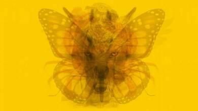 Photo of Το πρώτο ζώο που θα δεις στην φωτογραφία αποκαλύπτει την προσωπικότητά σου